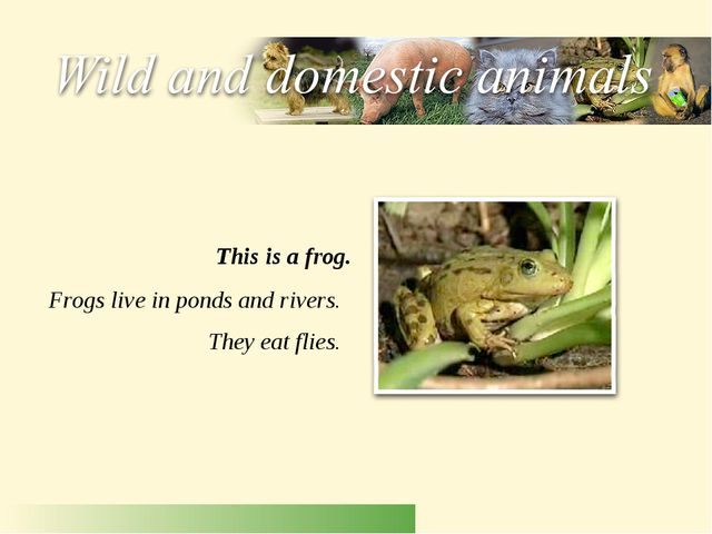 Frogs live in ponds and rivers. They eat flies. This is a frog.