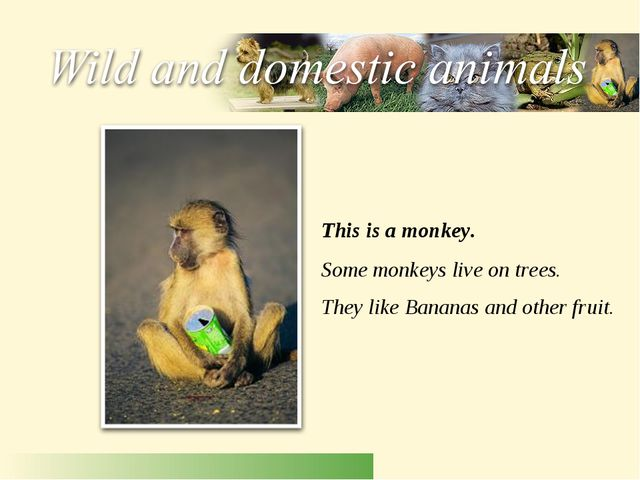 This is a monkey. Some monkeys live on trees. They like Bananas and other fru...