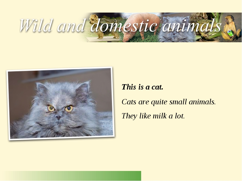 This is a cat. Cats are quite small animals. They like milk a lot.