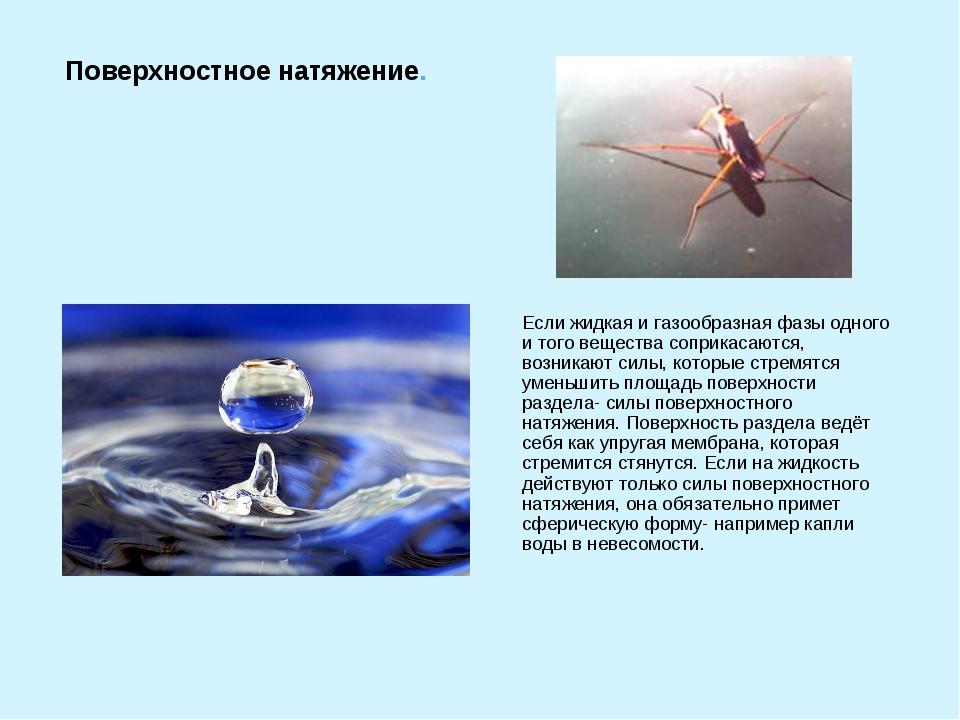 Если жидкая и газообразная фазы одного и того вещества соприкасаются, возника...
