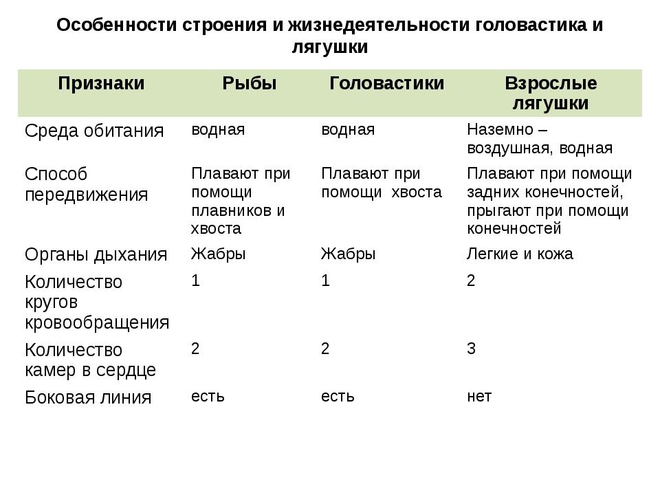 Особенности строения и жизнедеятельности головастика и лягушки Признаки Рыбы...