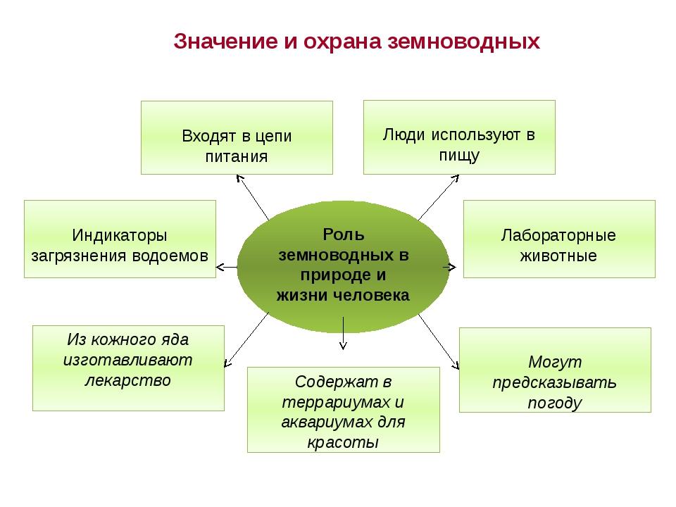 Значение и охрана земноводных Могут предсказывать погоду Роль земноводных в п...