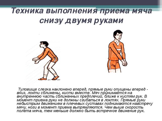 Техника выполнения приема мяча снизу двумя руками Туловище слегка наклонено в...