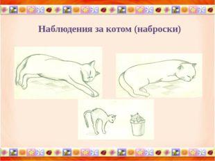 Наблюдения за котом (наброски)