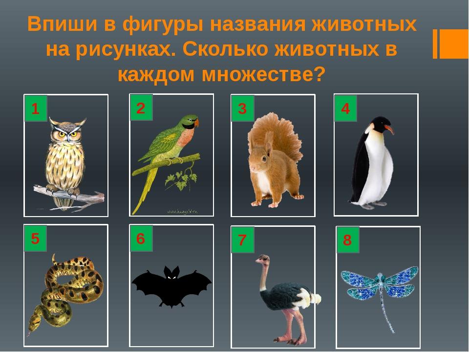 Впиши в фигуры названия животных на рисунках. Сколько животных в каждом множе...