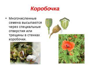 Коробочка Многочисленные семена высыпаются через специальные отверстия или тр