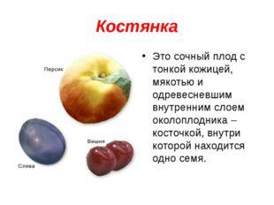 Костянка Это сочный плод с тонкой кожицей, мякотью и одревесневшим внутренним