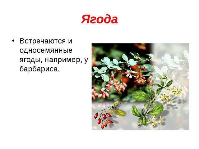 Ягода Встречаются и односемянные ягоды, например, у барбариса.