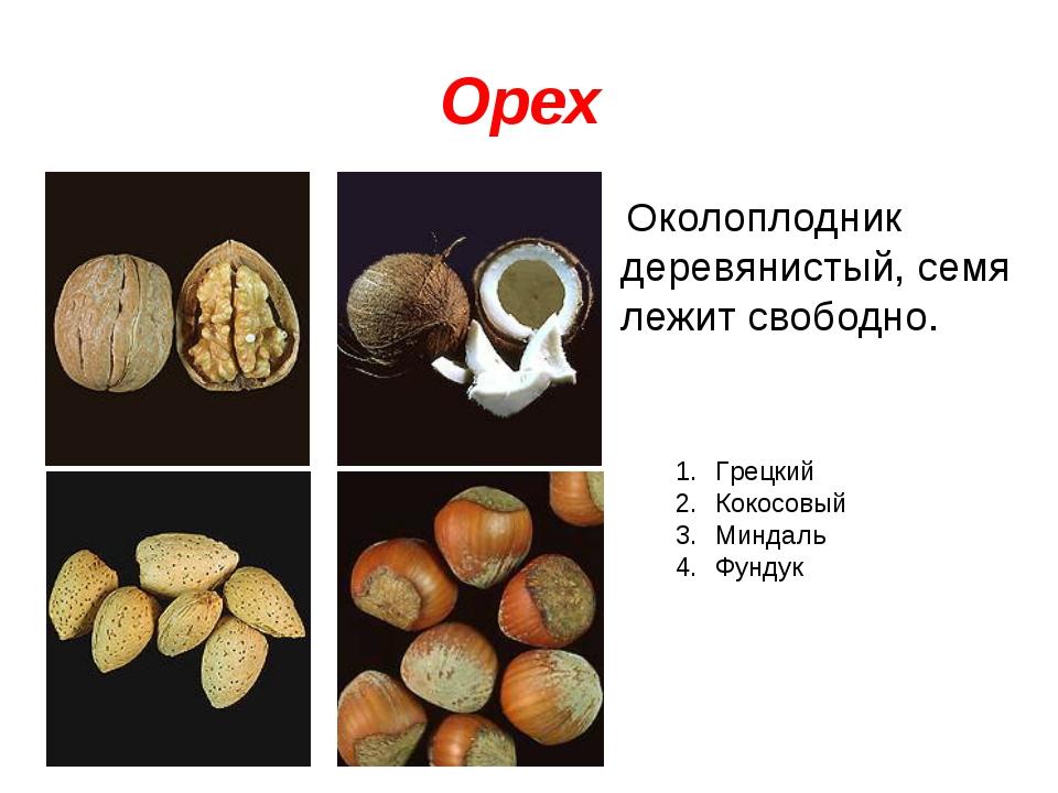 Орех Околоплодник деревянистый, семя лежит свободно. Грецкий Кокосовый Миндал...