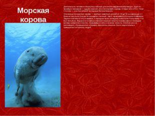 Морская корова Деятельность человека обернулась гибелью для многих видов млек