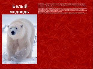 Белый медведь Белый медведь— один из самых крупных наземных представителей м