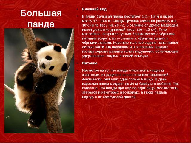 Большая панда Внешний вид В длину большая панда достигает 1,2—1,8м и имеет м...