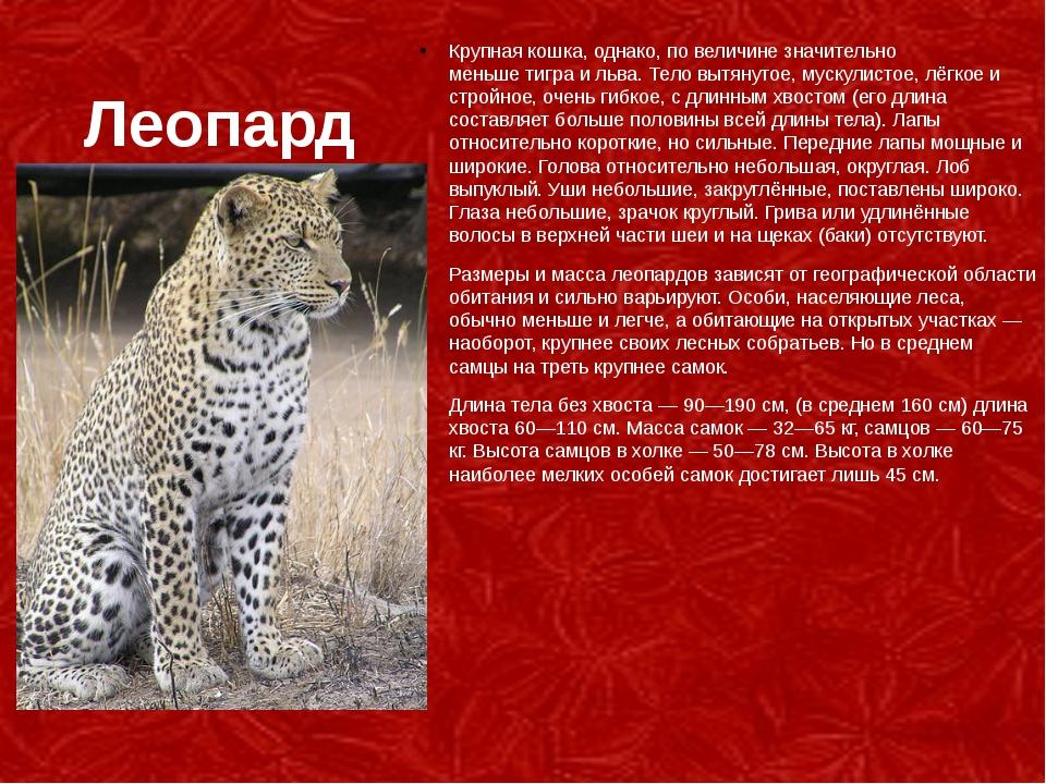 Леопард Крупная кошка, однако, по величине значительно меньшетиграильва. Т...