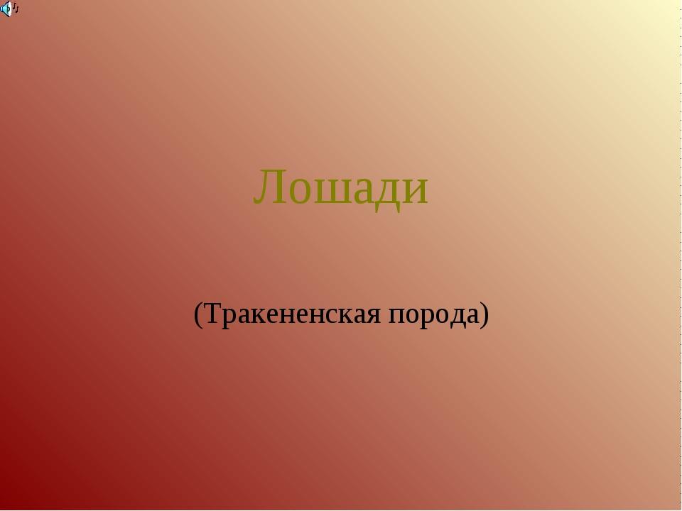 Лошади (Тракененская порода)