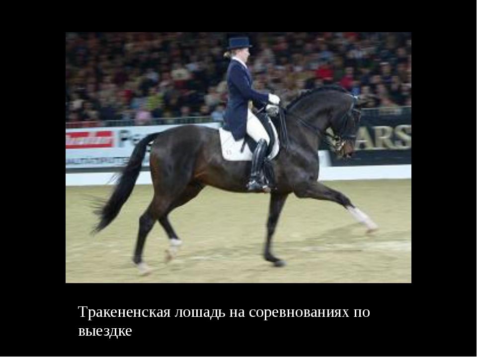 Тракененская лошадь на соревнованиях по выездке