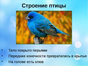 Строение птицы Тело покрыто перьями Передние конечности превратились в крылья