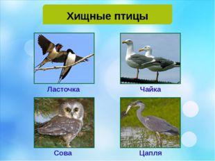 Хищные птицы Ласточка Чайка Сова Цапля
