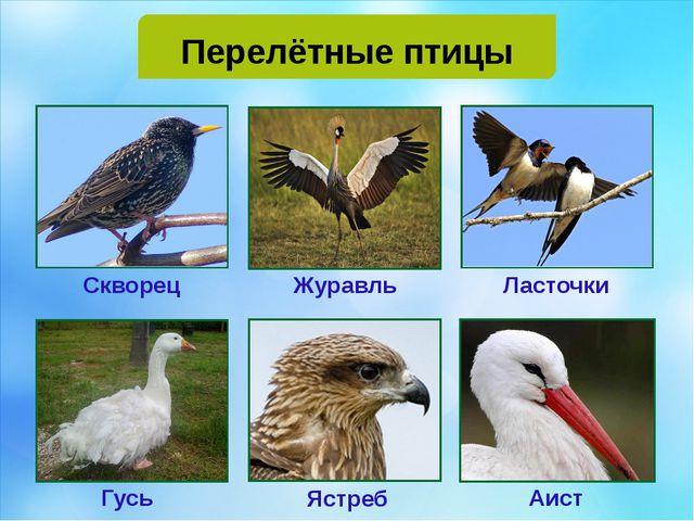 Перелётные птицы Скворец Журавль Ласточки Гусь Ястреб Аист