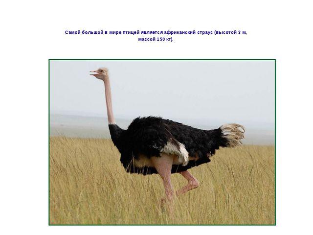Самой большой в мире птицей является африканский страус (высотой 3 м, массой...