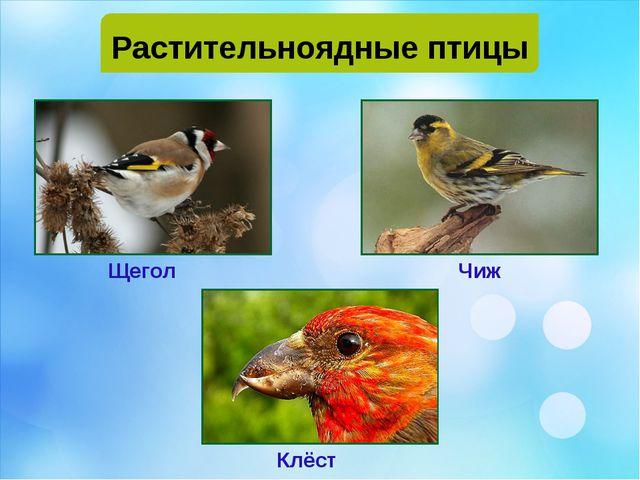 Растительноядные птицы Щегол Чиж Клёст