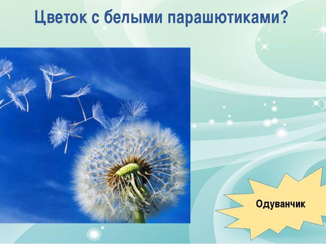 Цветок с белыми парашютиками? Одуванчик