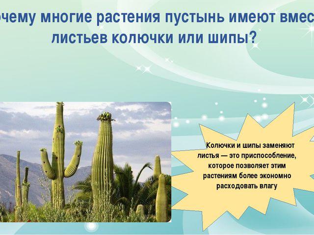 Почему многие растения пустынь имеют вместо листьев колючки или шипы? Колючки...