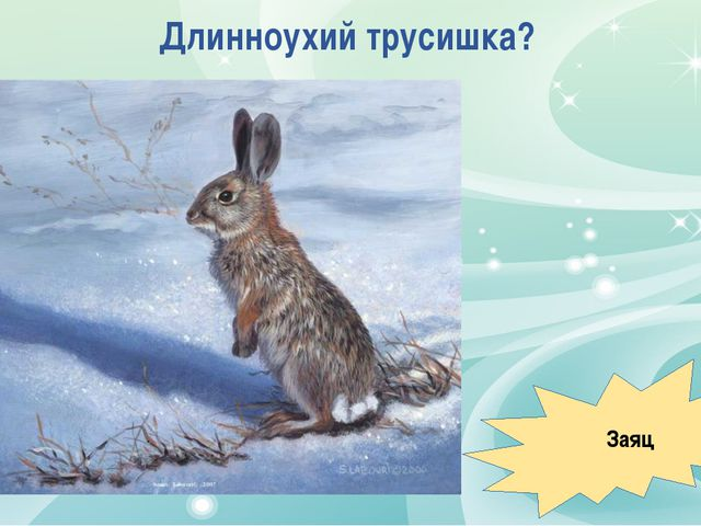 Длинноухий трусишка? Заяц