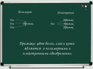 Полимерия Ген Ген Признак Ген Плейотропия Признак Ген Признак Признак Признак