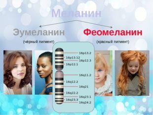 Меланин Эумеланин Феомеланин (чёрный пигмент) (красный пигмент)