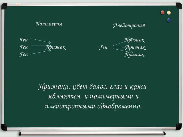 Полимерия Ген Ген Признак Ген Плейотропия Признак Ген Признак Признак Признак...