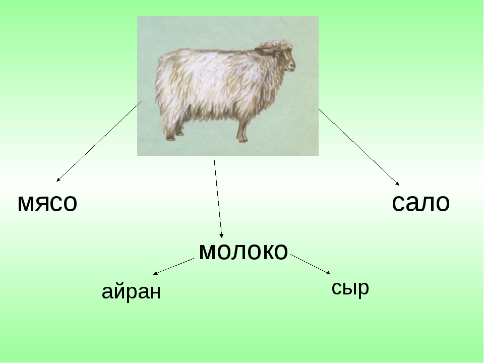 мясо сало молоко сыр айран