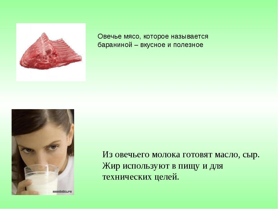 Овечье мясо, которое называется бараниной – вкусное и полезное Из овечьего мо...