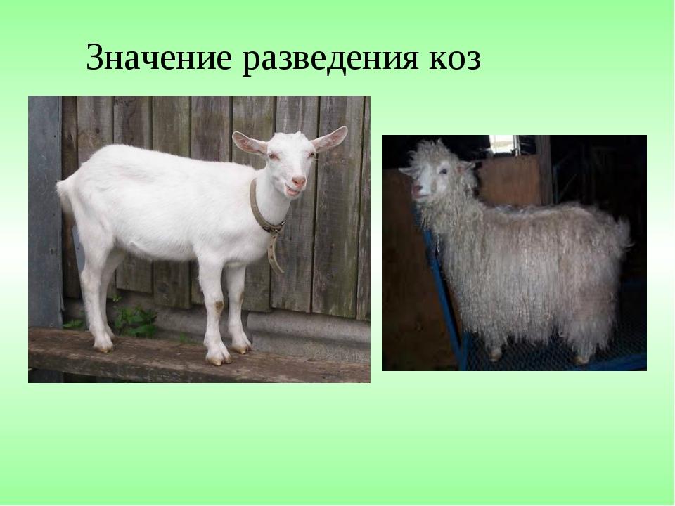 Значение разведения коз