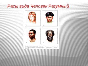 Расы вида Человек Разумный