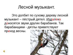 Лесной музыкант. Это долбит по сухому дереву лесной музыкант – пёстрый дяте