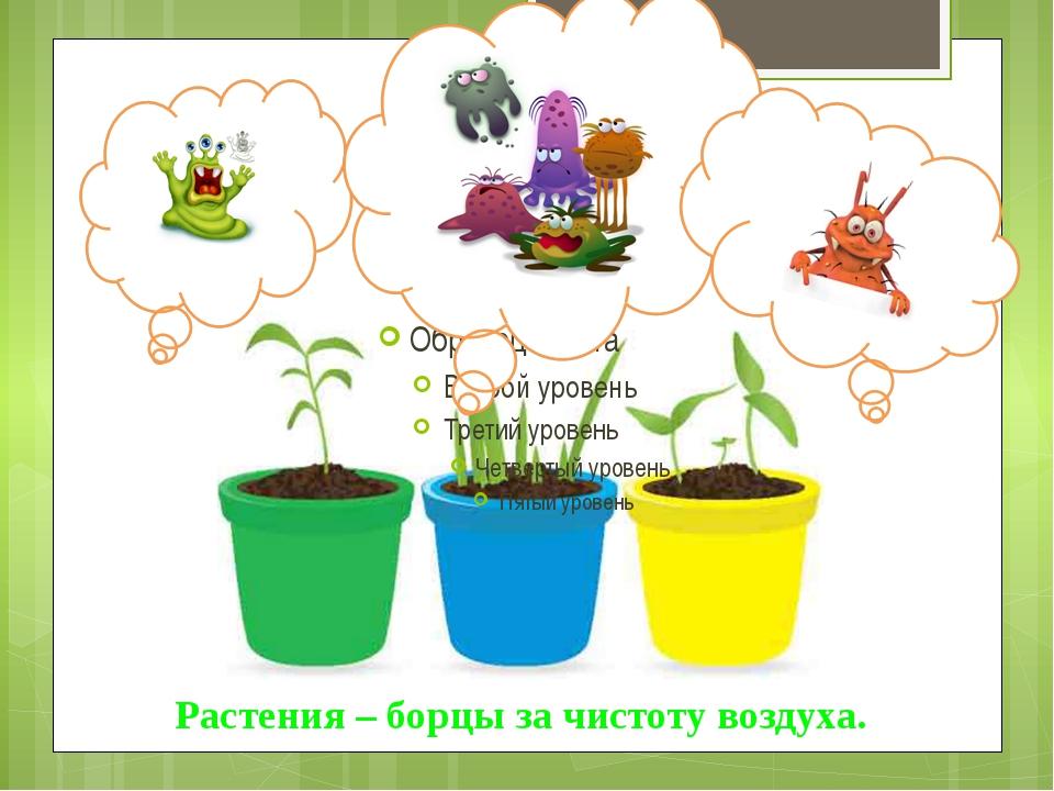 Растения – борцы за чистоту воздуха.