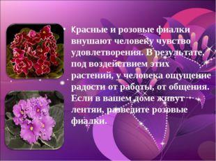 Красные и розовые фиалки внушают человеку чувство удовлетворения. В результат