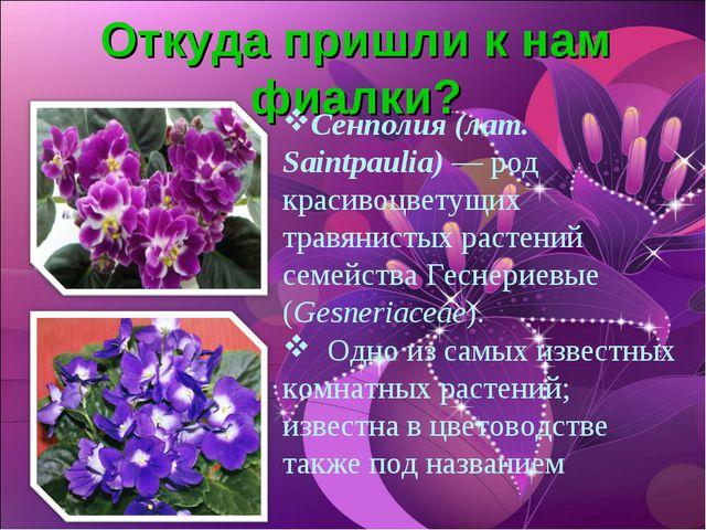 Откуда пришли к нам фиалки? Сенполия (лат. Saintpaulia) — род красивоцветущих...