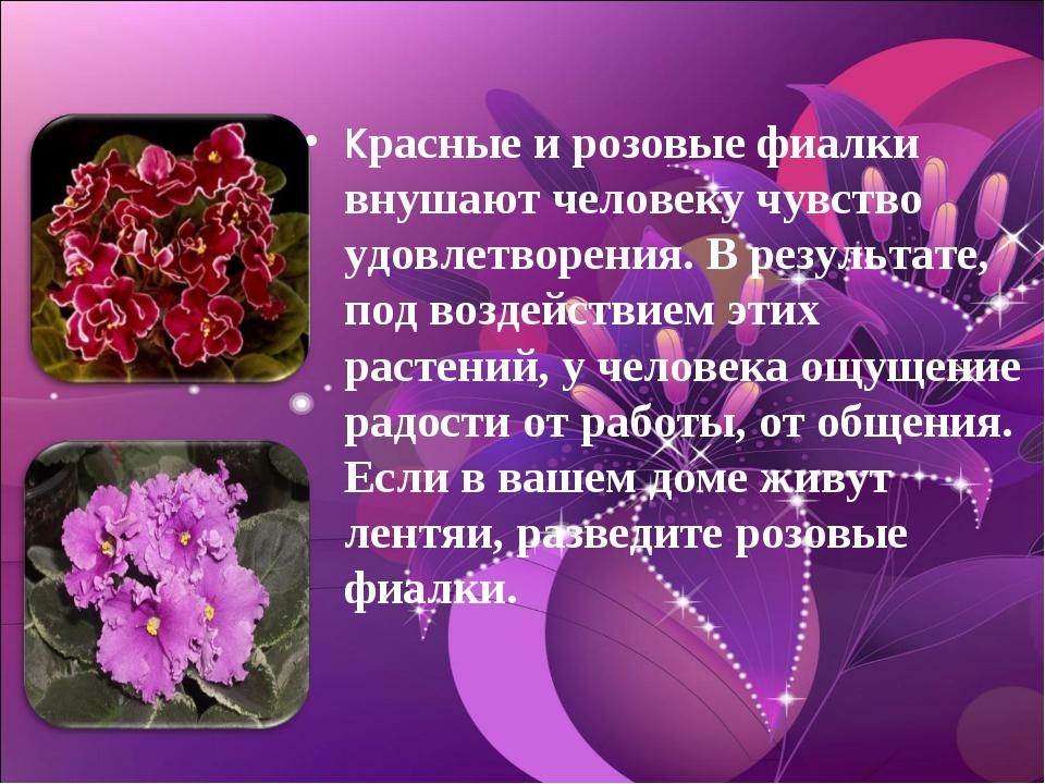 Красные и розовые фиалки внушают человеку чувство удовлетворения. В результат...