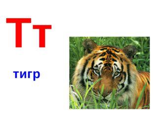 Тт тигр