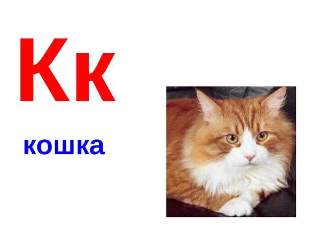 Кк кошка