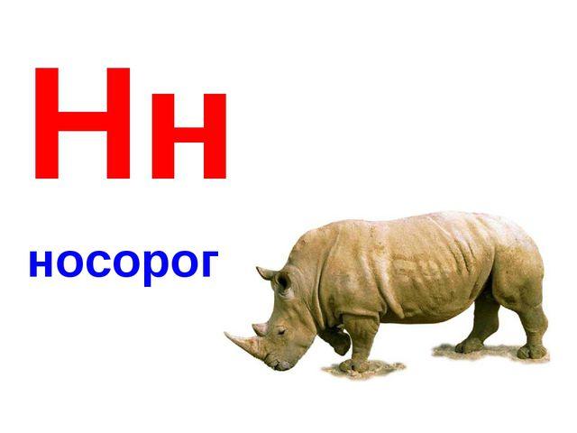 Нн носорог