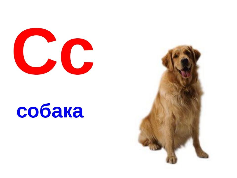 Сс собака