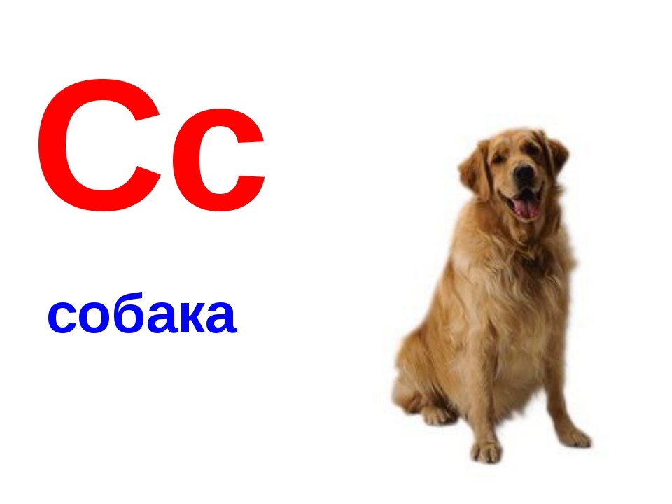 Обучающие картинки собака
