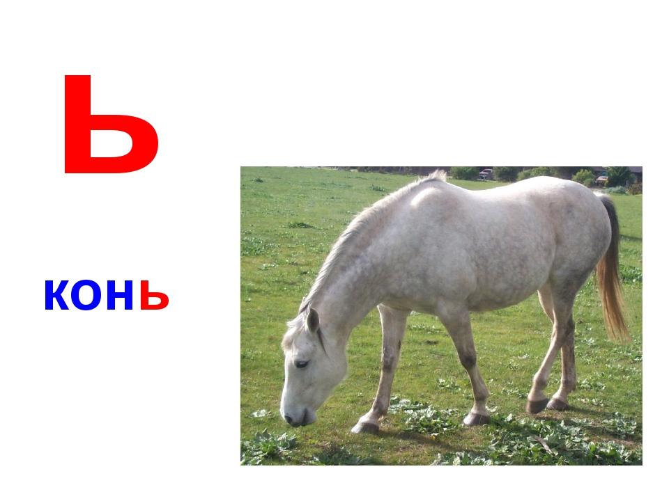ь конь