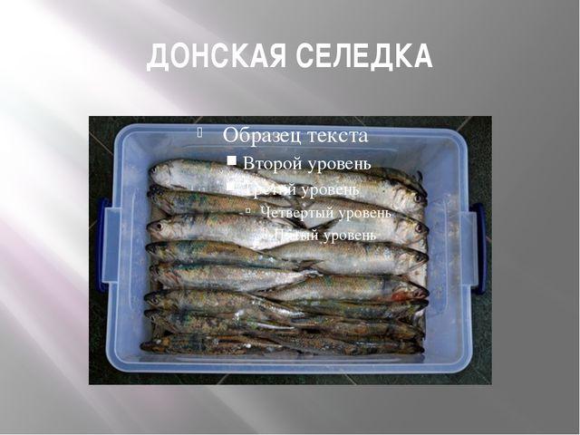 ДОНСКАЯ СЕЛЕДКА