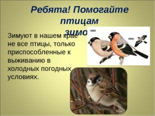 Ребята! Помогайте птицам зимой! Зимуют в нашем крае не все птицы, только прис