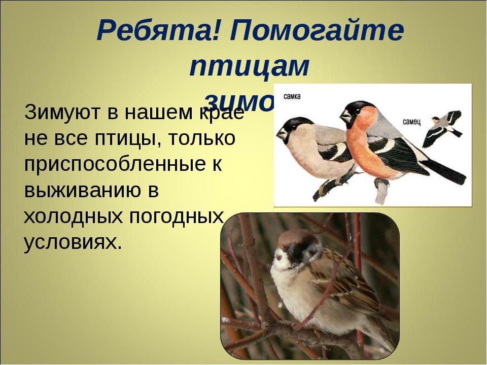 Ребята! Помогайте птицам зимой! Зимуют в нашем крае не все птицы, только прис...