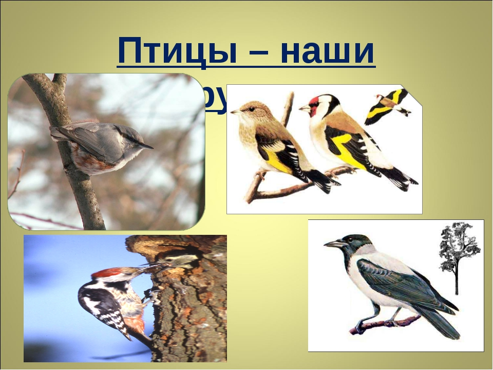 Птицы – наши друзья.