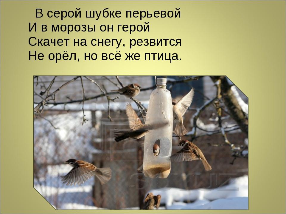 В серой шубке перьевой И в морозы он герой Скачет на снегу, резвится Не орёл...